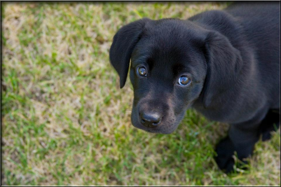 ivory-puppy