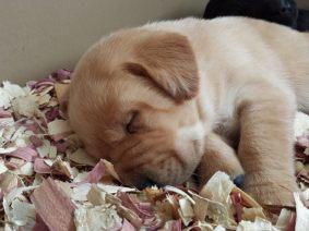 puppysleeping
